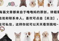 貪便宜花800元買了只藍貓,一身貓癬還傳染給了自己(真實案例)