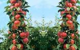 庭院有空地別隻顧著種菜,試試種這些果樹,營養好吃,想吃就去摘
