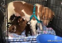 兩男子聽說23只狗狗即將被安樂死,開著自家飛機去營救,有錢任性