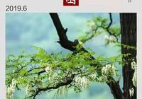 「散文」潘紅丨原來香椿樹也會開花