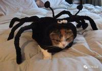 貓咪玩著小蜘蛛,突然蜘蛛媽媽來了