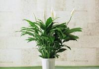 測試:憑第一感覺選一個最喜歡的盆栽,測測你今年能否大賺一筆