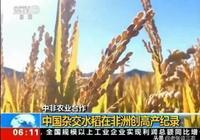 袁隆平雜交水稻在非洲再次創單產10.8噸記錄!是不是接下來水稻價格又要跌了?