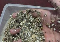 龜蛋孵化中的關於溼度偏高偏低的一些個人見解