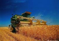 為什麼現在農村很多田地全部拋荒了?
