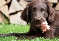要想小狗身體健康,一定不要給它吃這5種食物,不然會害了它