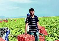 山東農民靠賣菜年入4.8億元,誰說做農業不能致富?