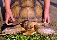 烏龜該如何家養才能最省心?幾招教你給烏龜製造一個舒適的環境?