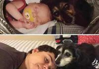 狗狗與主人十年前後對比照,這種感情沒狗的人不會懂