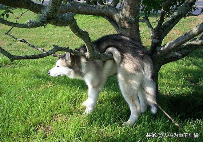 """""""我說是樹把我弄上來的,主人你信嗎""""9張搞笑狗狗圖讓你笑不停"""