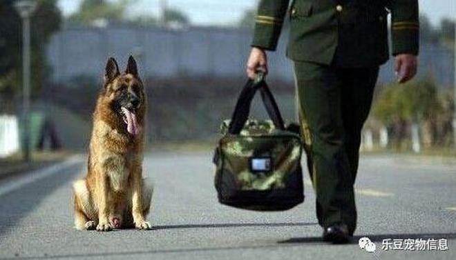 警犬和戰士生死相依的情感又有誰人懂?看了這組圖後說不出話!