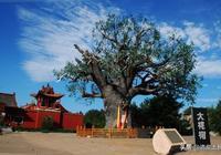 知道你老家在哪兒嗎?有知道山西大槐樹,有誰知道江西瓦屑壩嗎?