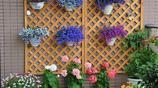 養花的人都能長壽!8種讓人長壽的花卉,家裡必須得擺上一盆!
