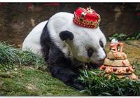 大熊貓巴斯病逝,外國人痛心哀悼,他們居然比我們更愛大熊貓?!