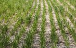 春天時節,農民田間地頭忙忙碌碌,種下豐收的期盼