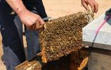 """正宗蜂蜜不止是甜,有的帶酸有的還帶苦,聽30年老蜂農咋""""解蜜"""""""