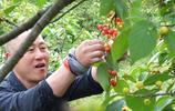湖北宜昌:美麗鄉村 遊客在三峽富裕山採摘品嚐櫻桃