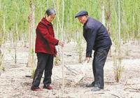 他花35年在戈壁種了80萬棵樹 立志這輩子要種100萬棵