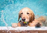 帶狗子去寵物樂園暢玩過週末——上海寵物生活水平真的好