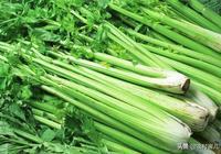 有機芹菜怎樣種植?芹菜的選種、育苗及田間管理技術!