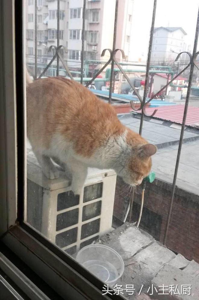 流浪貓日夜蹲守我家窗口,吃了肉還賴著不走,原來是盯上我家雲雀