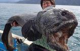 一位漁民在海里打撈,發現這隻似魚非魚的怪物,竟價值百萬!