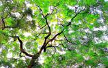 奇異的樹木王國