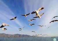 禽流感到底是怎麼傳播的?