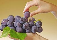 哪種葡萄最美味?巨峰?喜樂?醉金香還是玫瑰香?