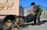 10張軍人與軍犬的分離現場,張張催人淚下