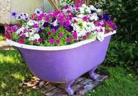 小陽臺適合種的6種盆栽小花,好看又好養的爆盆花卉
