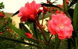 自然風光圖集:迎春花