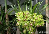 松子殼能做蘭花的植料嗎?