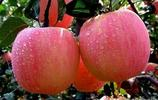 世界上有多少種蘋果你知道嗎?中國這幾種都賣給老外了你吃過嗎?