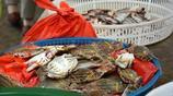 節後海鮮價格走低 秋涼貼秋膘 20元螃蟹一頓沒吃了