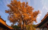 濟南蟠龍山下的淌豆寺,千年銀杏染黃了千年古剎
