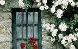 鮮花裝飾了你的窗子,你裝飾了我的夢