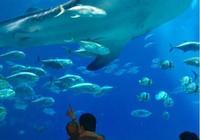 伊利亞索瓦晒自己與兒子去水族館的照片