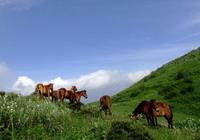 """恩施利川境內有一個被稱為""""利川萬里長城""""的齊嶽山"""