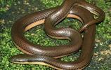 寵物圖集-寵物蛇