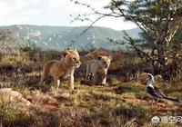 中國什麼時候可以拍出《獅子王》這樣的電影?