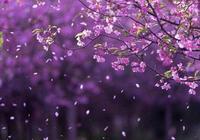 古詩詞中寫落花的千古名句,感受傷春之愁,背下來寫作文能用上!