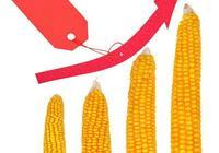 """專家列出5點原因,預言2019年玉米市場陷入""""搶糧""""局面"""