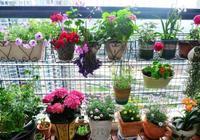 3種花卉沾土就活,枝葉扦插就能成活,在家就可以擁有一個花園