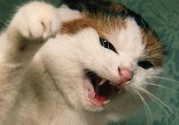 鏟屎官養貓需注意:貓咪最厭煩的這五種行為,看看你中招了嗎?
