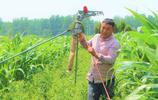 小麥成熟了,為什麼農民不及時收割?農民大哥告訴你真相