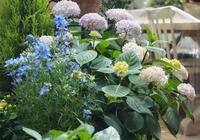 什麼是一、二、多年生花卉?春秋冬季分別有哪些開花?