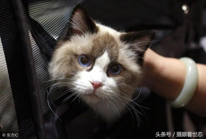 百多隻萌態十足的貓在一起肯定萌翻全場,網友說:心都快萌化了