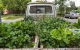 曾經夢想著自己擁有一輛汽車,如今小區業主在上面種起了蔬菜