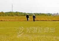 """政策性農業保險為農民撐起""""保護傘"""""""